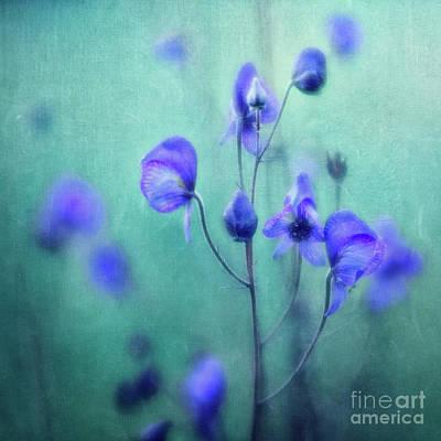 Photograph - Summer Meadow by Priska Wettstein
