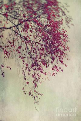 Melancholia Wall Art - Photograph - Summer Melancholy by Priska Wettstein