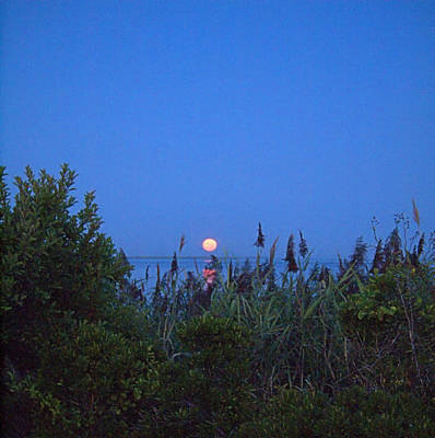 Photograph - Summer Moon by  Newwwman