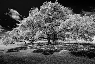 Big Tree Photograph - A Summer's Night by Darryl Dalton
