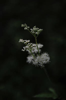 Cow Parsley Wall Art - Photograph - Summer Night Dream by Randi Grace Nilsberg