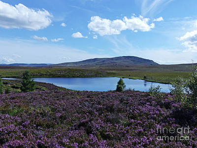 Photograph - Summer On Dava Moor  by Phil Banks