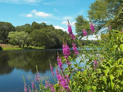 Photograph - Summer On Kings Pond by Georgia Hamlin