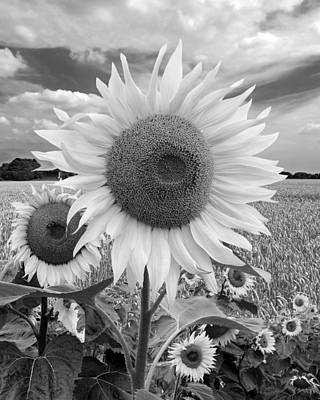 Photograph - Summer On The Farm Black And White Vertical by Gill Billington