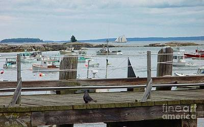 Photograph - Summer On The Harbor by Christopher Mace