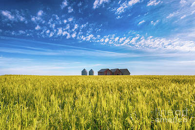 Summer On The Prairies Print by Ian McGregor