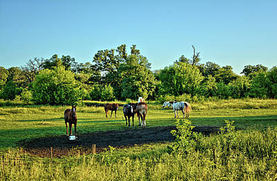Photograph - Summer Pastures by Bonfire Photography