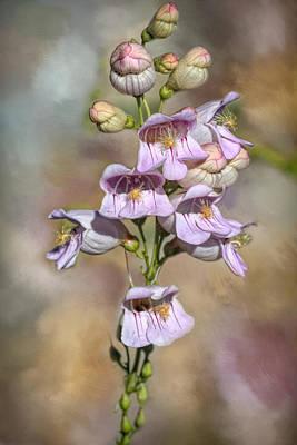 Photograph - Summer Penstemon by Donna Kennedy