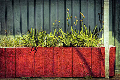 Photograph - Summer Planter - 365-128 by Inge Riis McDonald