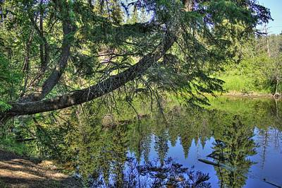 Photograph - Summer Pond by Jim Sauchyn