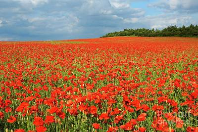 Photograph - Summer Poppies In England by David Birchall