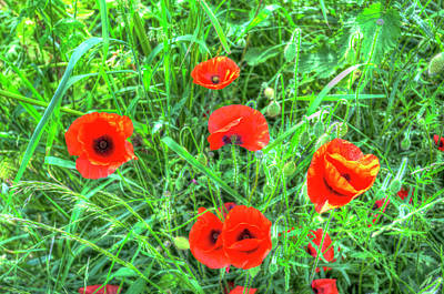 Photograph - Summer Poppy by David Pyatt