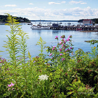 Photograph - Summer, Port Clyde, Maine  -87342 by John Bald