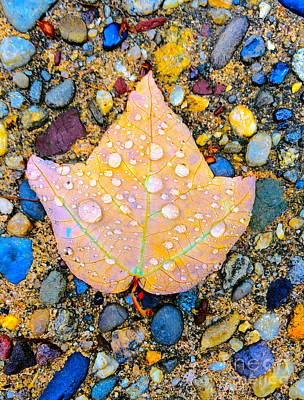 Summer Rain Leaf Art Print