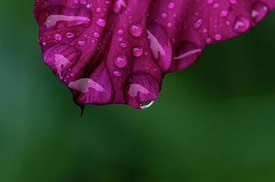 Photograph - Summer Rain by Nathan Larson