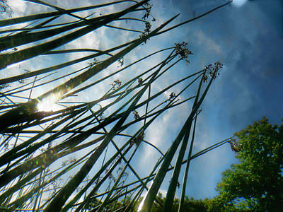 Photograph - Summer Reeds by Tammy Wetzel