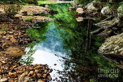 Photograph - Summer Reflection Williams River  by Thomas R Fletcher