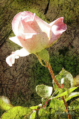 Photograph - Summer Rose by Jim And Emily Bush