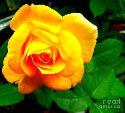 Photograph - Summer Rose by Garnett Jaeger