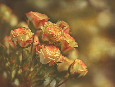 Photograph - Summer Roses #2 by Pat Abbott