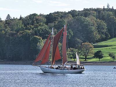 Photograph - Summer Sailing In Lunenburg by George Cousins