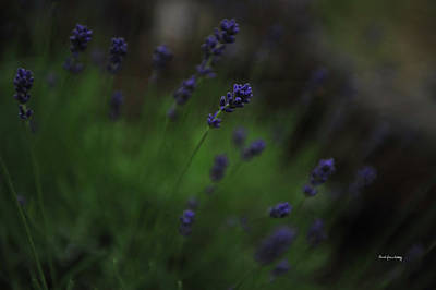 Photograph - Summer Scent Of Lavender by Randi Grace Nilsberg