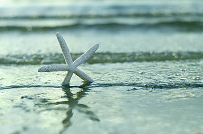 Photograph - Summer Sea Star by Laura Fasulo