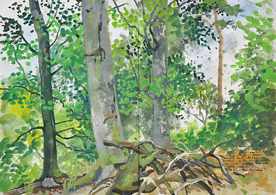 Painting - Summer Season,beech Tree Forest by Martin Stankewitz