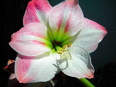 Summer Shower Flower Art Print