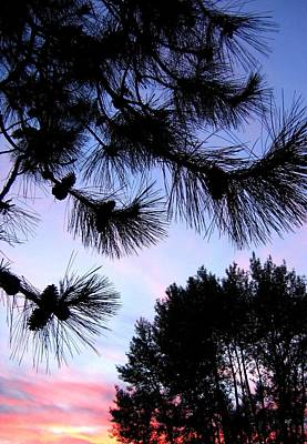 Pine Cones Photograph - Summer Silhouettes by Will Borden
