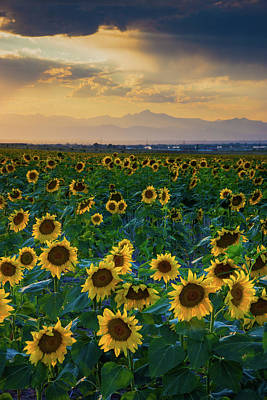 Photograph - Summer Skies And Sunflowers by John De Bord