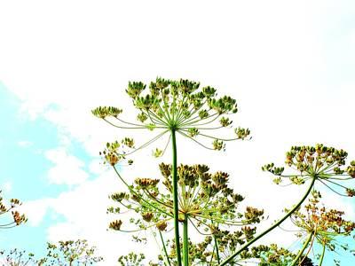 Photograph - Summer Sky by Karen Stahlros