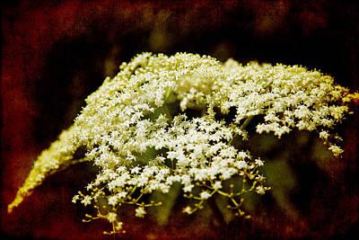 Photograph - Summer Snowflakes by Milena Ilieva