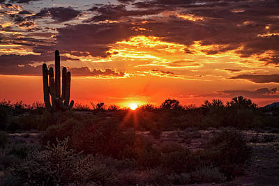 Photograph - Summer Sonoran Style  by Saija Lehtonen