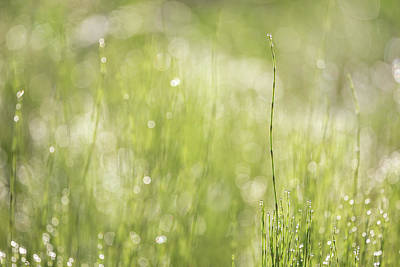 Photograph - Summer Sparkle by Penny Meyers