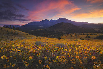 Peter James Nature Photograph - Summer Splendor by Peter Coskun
