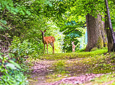 Photograph - Summer Stroll by Anthony Baatz