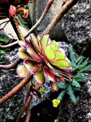 Photograph - Summer Succulent by Karen Stahlros