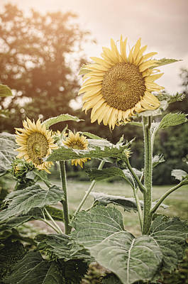 Summer Sun Art Print by Heather Applegate