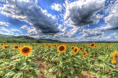 Photograph - Summer Sunflower Landscape  by David Pyatt