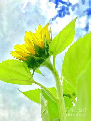 Photograph - Summer Sunflower  by Susan Carella