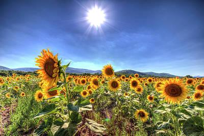 Photograph - Summer Sunflowers by David Pyatt