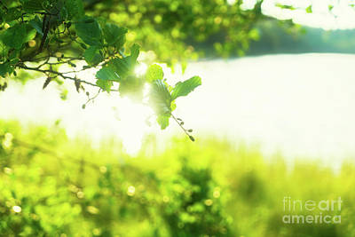 Pop Art Rights Managed Images - Summer Sunshine Royalty-Free Image by Anastasy Yarmolovich