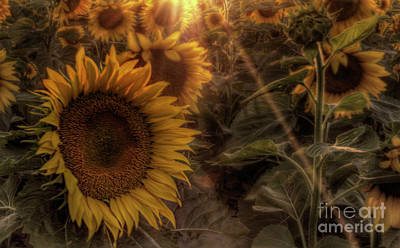 Photograph - Summer Sunshine by Michele Richter