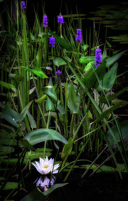 Photograph - Summer Swamp 2017 by Bill Wakeley