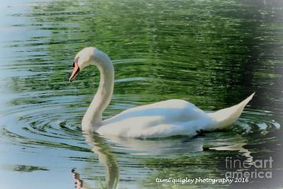 Photograph - Summer Swan  by Tami Quigley