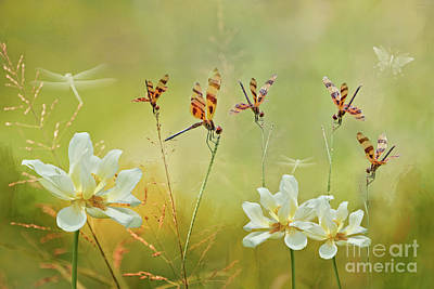 Photograph - Summer Symphony by Bonnie Barry