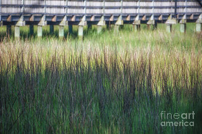 Photograph - Summer Time Marsh Grass by Dale Powell