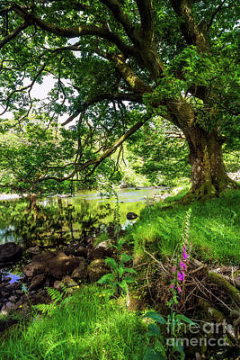 Photograph - Summer Tree by Ian Mitchell