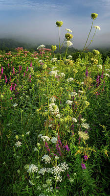 Photograph - Summer Wildflowers by Bill Wakeley